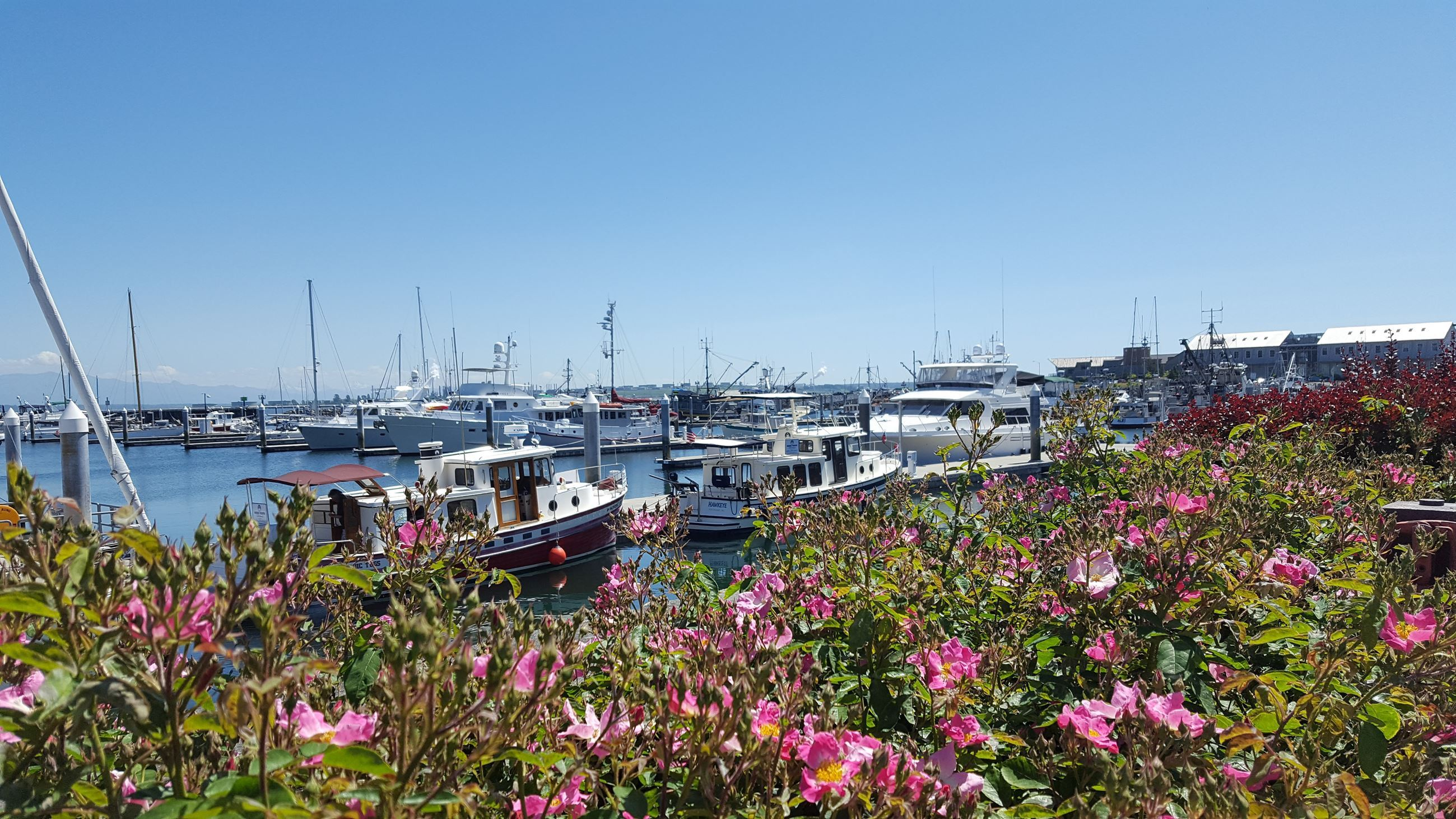 flowers-boats