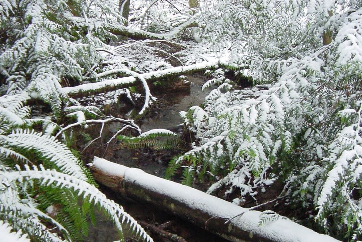 acfl snowy creek